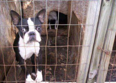 Prohibición de criaderos de perros y gatos