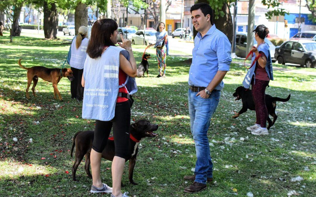 El Concejo busca prohibir en Rosario los criaderos de perros y gatos